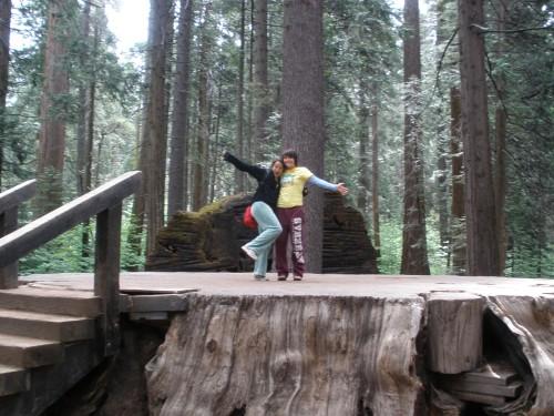 Sequoia Stump (optimized)