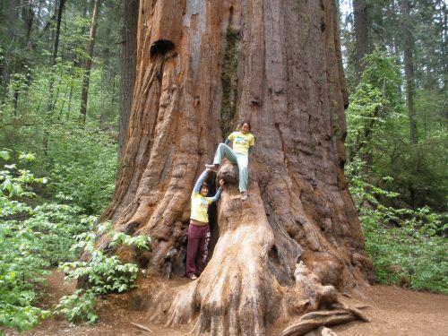 Sequoia (Live) Optimized
