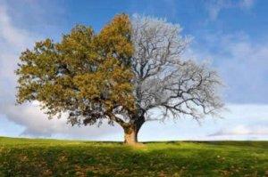 yinyang_tree_17