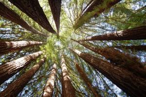 circleOfTrees